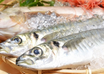お魚メインのお弁当
